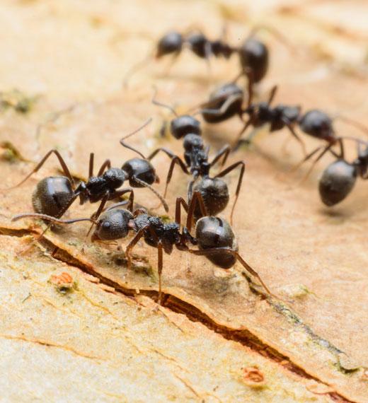 sidam formica